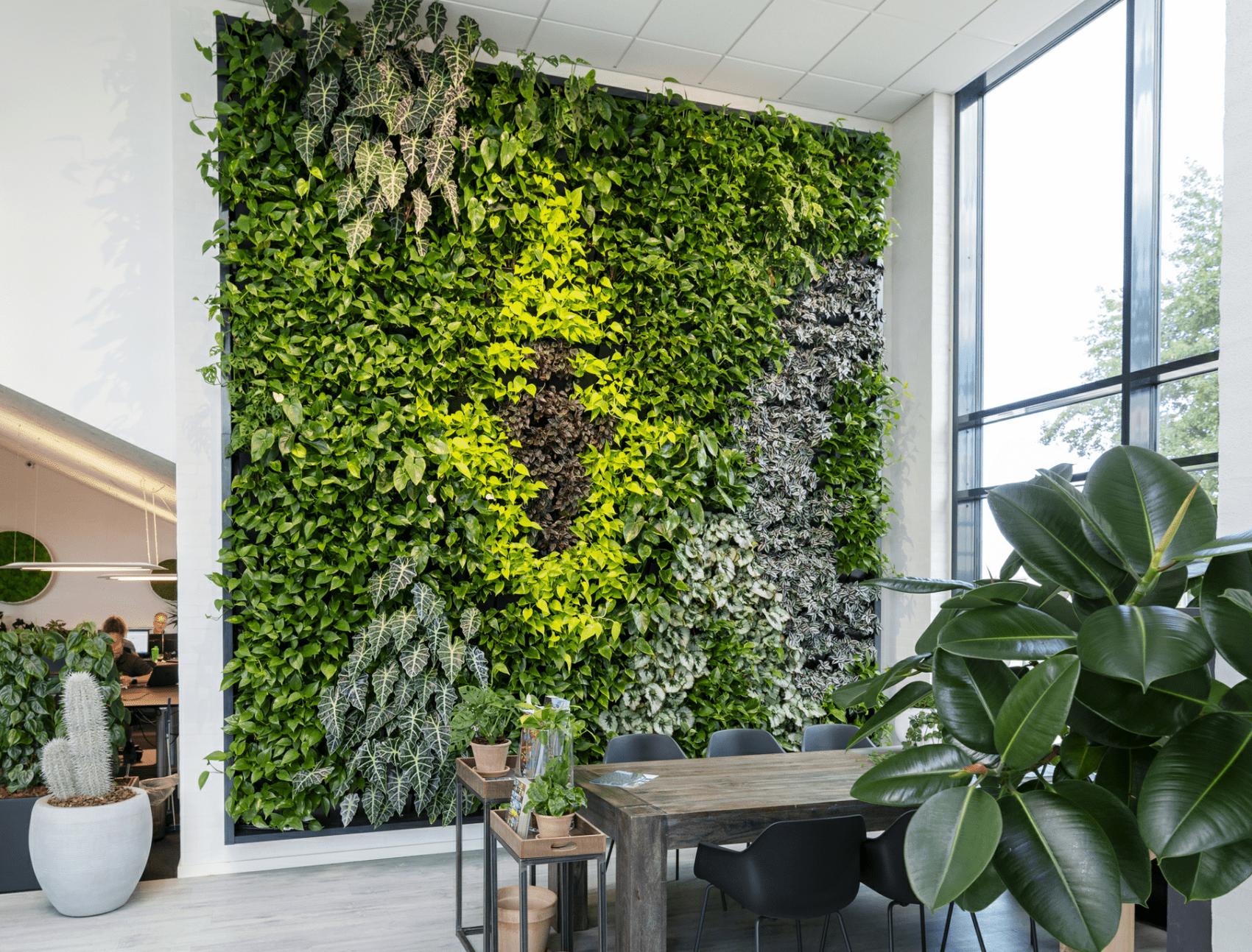 Pflanzenwand im Büro
