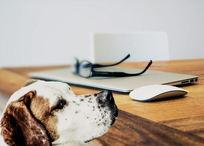 Hunde im Büro